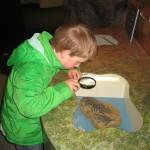 Fossielen onderzoek