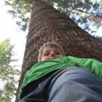 hooooge, rechte boom