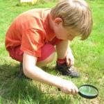 op zoek naar insecten